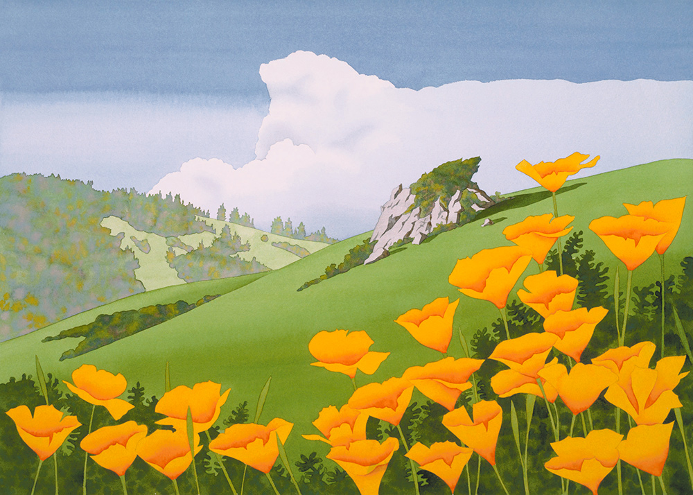 Poppies on the headlands
